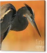 Great Blue Heron Focus Canvas Print