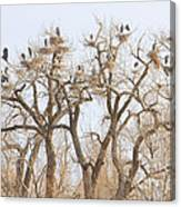 Great Blue Heron Hangout Canvas Print