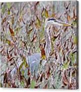 Great Blue Heron In Fall Marsh Canvas Print