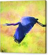 Great Blue Heron In Flight Art Canvas Print