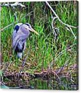 Great Blue Heron In Nature Canvas Print