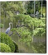 Great Blue Heron In Pond Kyoto Japan Canvas Print