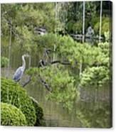 Great Blue Heron In Pond Kyoto Japan Canvas Print