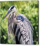 Great Blue Heron Iv Canvas Print