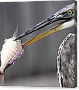 Great Blue Heron - Just Fred Canvas Print