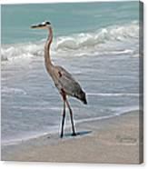 Great Blue Heron On Beach Canvas Print