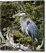 Great Blue Heron On Log Canvas Print