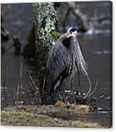 Great Blue Heron On The Clinch River Canvas Print