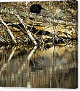 Great Blue Heron Reflection Canvas Print