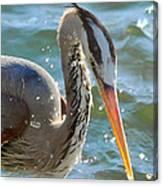 Great Blue Heron Splish Splash Canvas Print