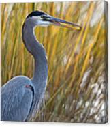 Great Blue Heron Square Image Canvas Print