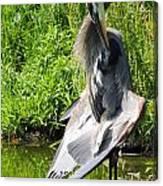 Great Blue Heron Yoga Canvas Print