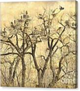 Great Blue Herons Colonies Fine Art Canvas Print