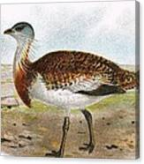 Great Bustard Canvas Print