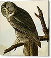 Great Cinereous Owl Canvas Print