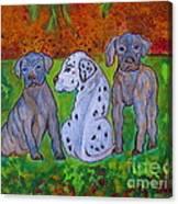 Great Dane Pups Canvas Print
