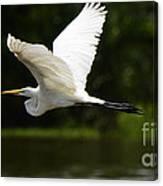 Great Egret Amazon River Canvas Print