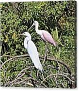 Great Egret And Roseate Spoonbill Canvas Print