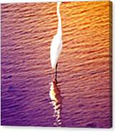 Great Egret At Sundown  Canvas Print