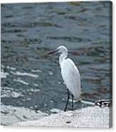 Great Egret Bird Canvas Print