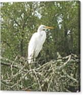 Great Egret Lookout Canvas Print