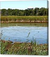 Great Egret On Berm Pond At Tifft Nature Preserve Buffalo New York Canvas Print