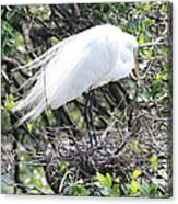 Great Egret On Nest Canvas Print