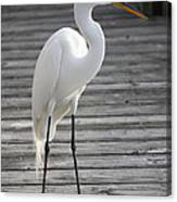 Great Egret On The Pier Canvas Print