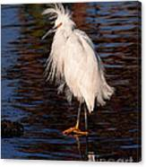 Great Egret Walking On Water Canvas Print