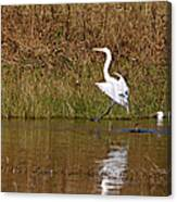 Great Egret Wing Water Reflections 3 Canvas Print