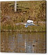 Great Egret Wing Water Reflections Canvas Print