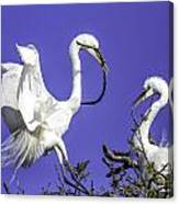 Great Egrets Nesting Canvas Print