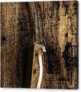 Great Grandpa's Knife Canvas Print