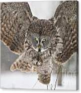 Great Gray Owl Pictures 634 Canvas Print