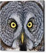 Great Gray Owl Pictures 680 Canvas Print