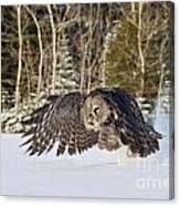 Great Gray Owl Pictures 740 Canvas Print