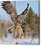 Great Gray Owl Pictures 767 Canvas Print