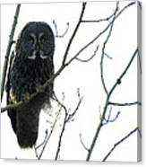 Great Grey Owl On The Lookout Canvas Print