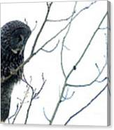 Great Grey Owl On Watch Canvas Print