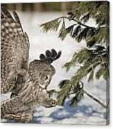 Great Grey Owl Pictures 23 Canvas Print