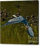 Great Heron Over Oyster Beds Canvas Print
