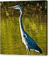 Great Heron Canvas Print