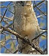 Great Horned Owl 2 Canvas Print