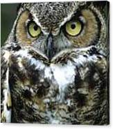 Great Horned Owl At Rest Canvas Print