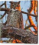 Great Horned Owl At Sunset Canvas Print
