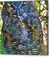 Great Horned Owl In Salmonier Nature Park-nl Canvas Print