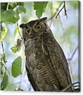Great Horned Owl On A Branch  Canvas Print