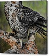 Great Horned Owl On Branch Canvas Print