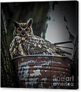 Great Horned Owl On Nest Canvas Print