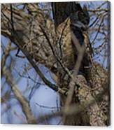Great Horned Owl On Watch Canvas Print